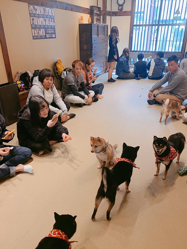 Review du lịch Nhật Bản: Tokyo - Osaka - Kyoto 10 ngày chỉ 16 triệu 13